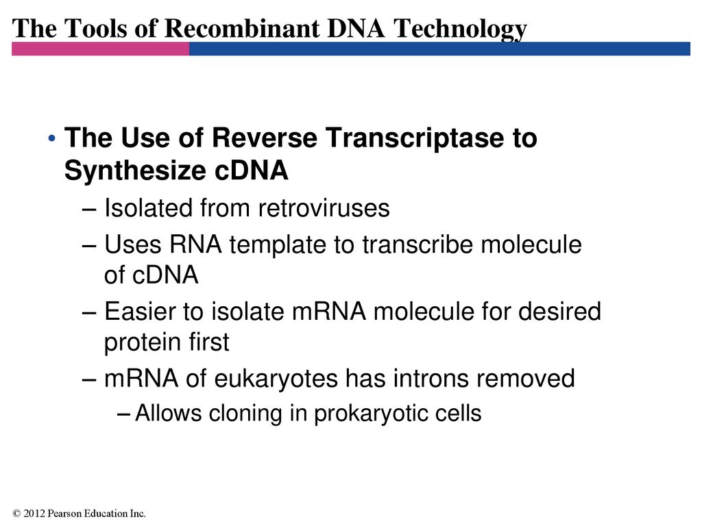 Recombinant dna technology ppt download the tools of recombinant dna technology maxwellsz