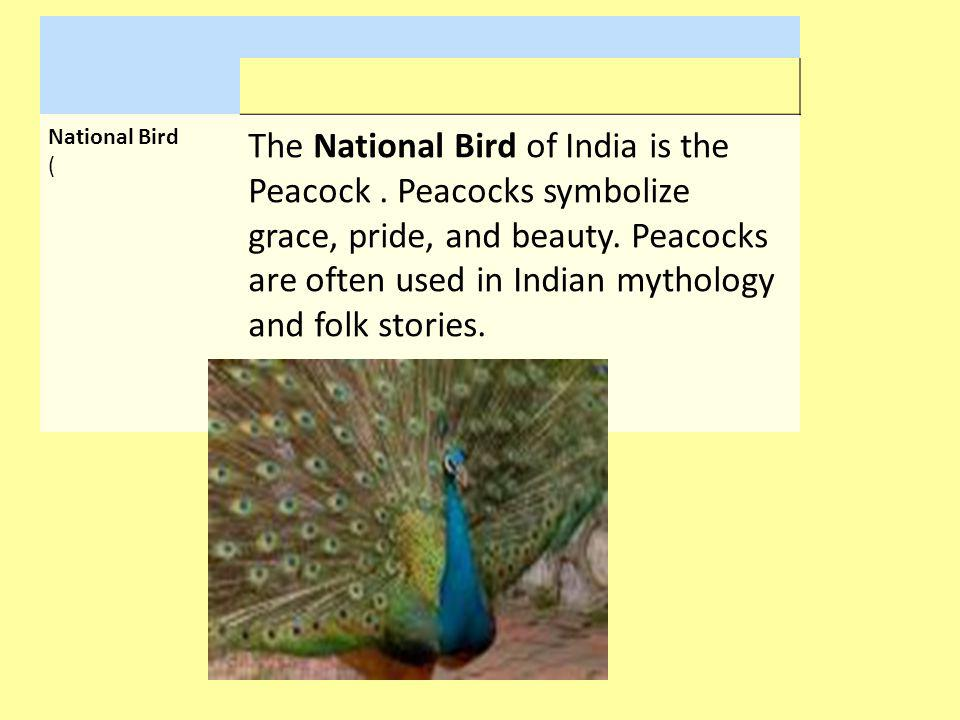 National Bird (