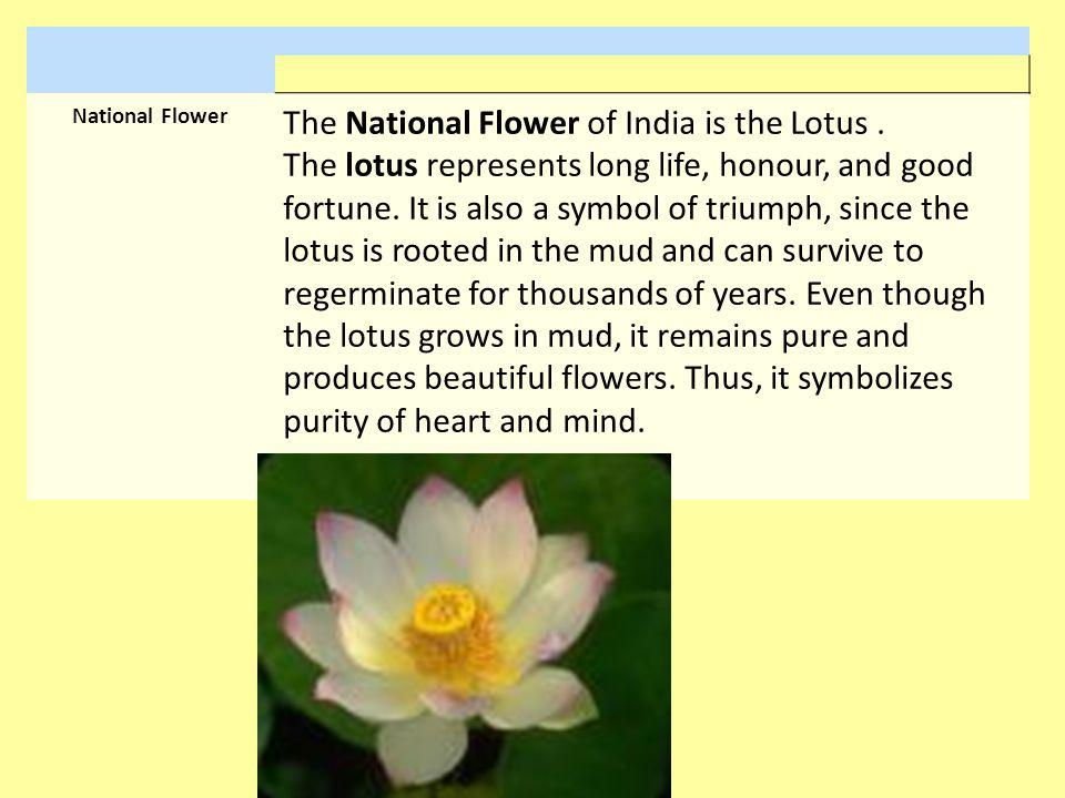 National Flower