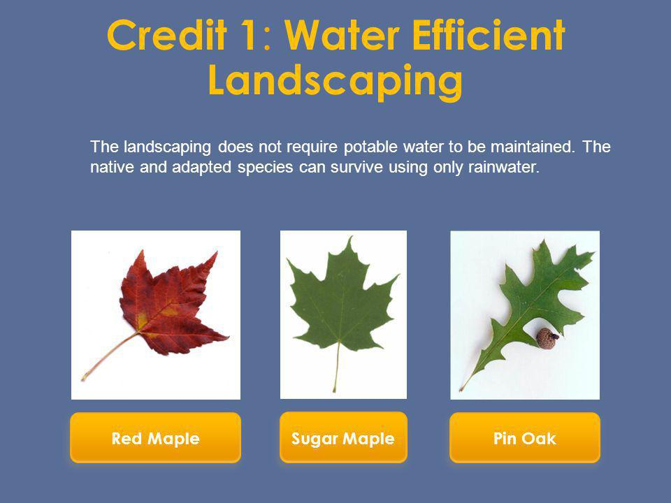 Credit 1: Water Efficient Landscaping