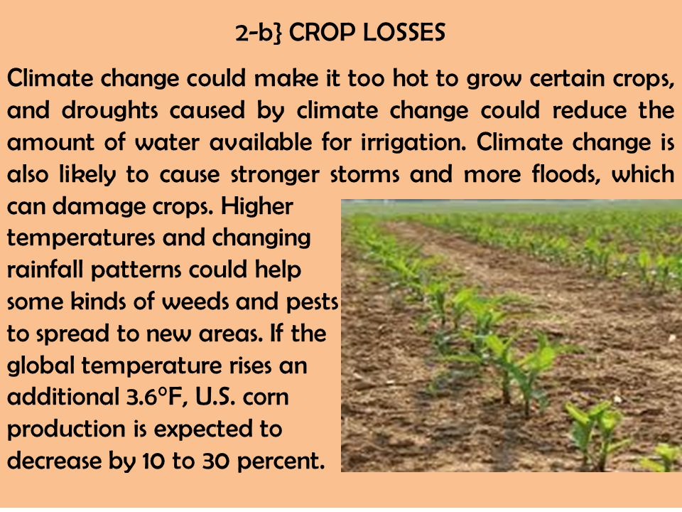 2-b} CROP LOSSES