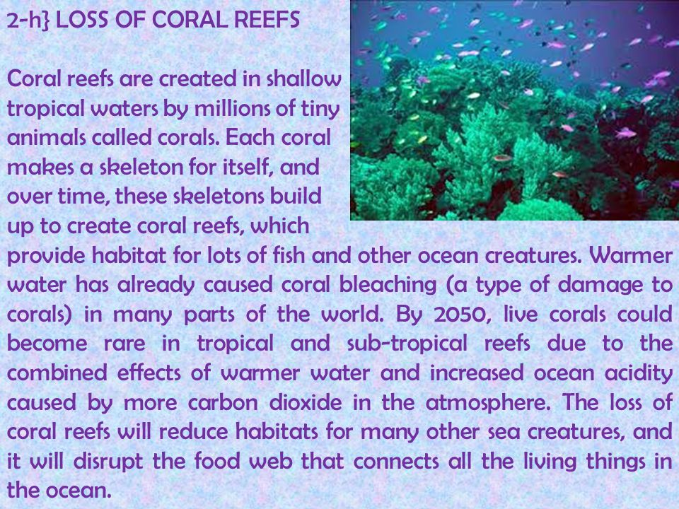 2-h} LOSS OF CORAL REEFS Coral reefs are created in shallow. tropical waters by millions of tiny. animals called corals. Each coral.