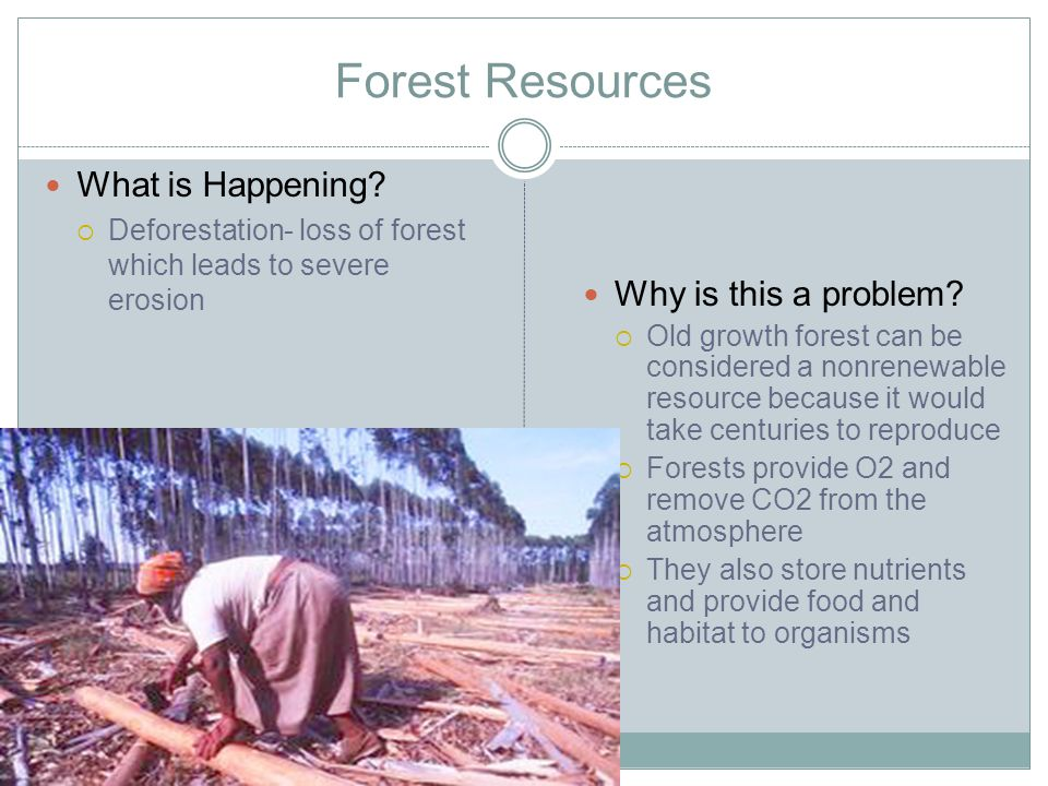 Forest Resources What is Happening Why is this a problem