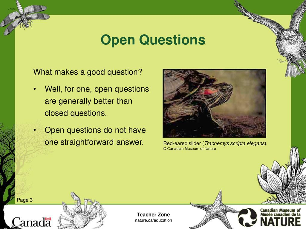 Invasive Species: Asking Questions - ppt download