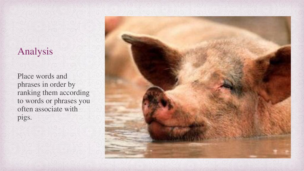 view of a pig poem