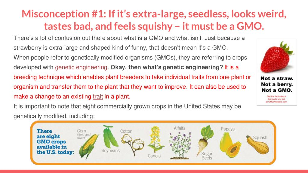 EQ: What are the misconceptions about Genetically Modified