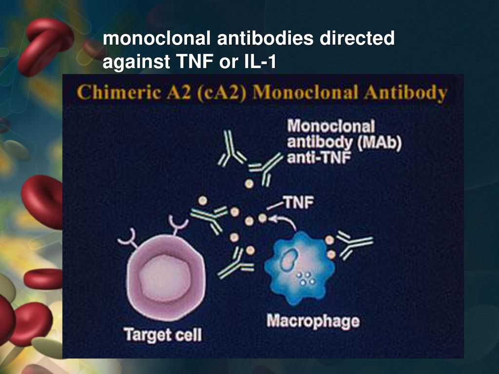 monoclonal antibodies directed against TNF or IL-1