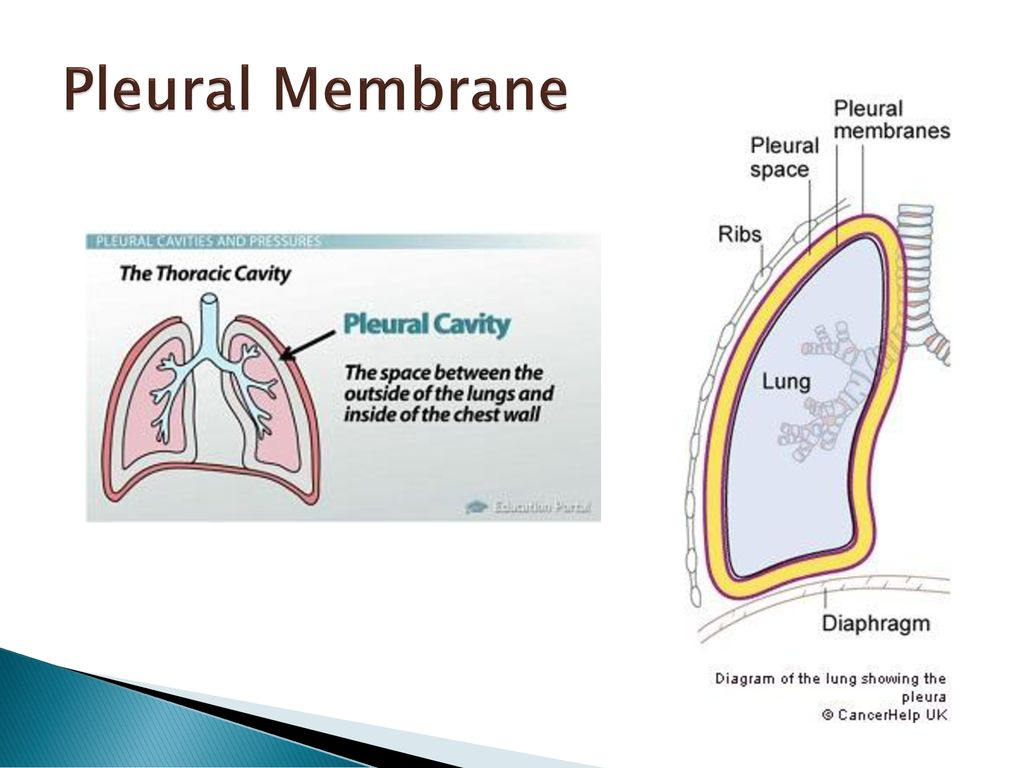 respiratory system 6.4 & d6. - ppt download