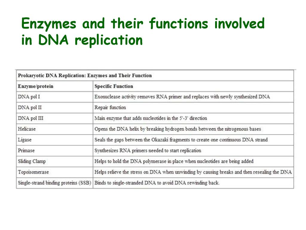 Enzymes And Their Functions Involved In Dna Replication Ppt Download