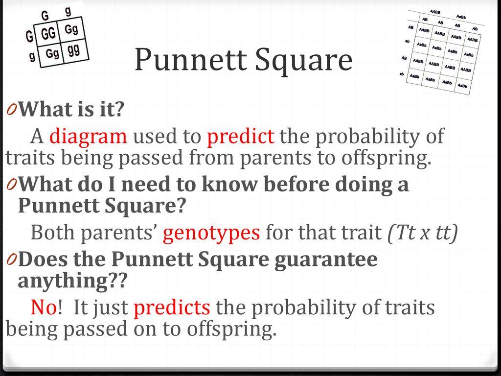 Genetics Punnett Square Notes Ppt Download Diagram 8