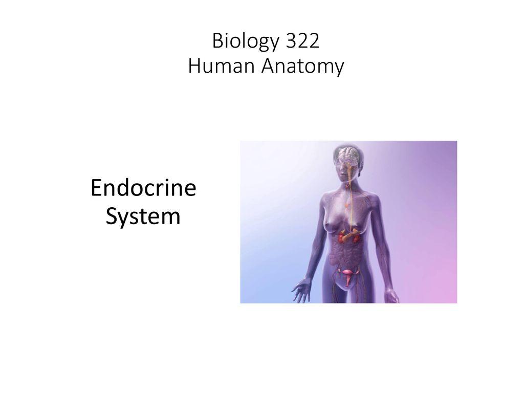 Biology 322 Human Anatomy Endocrine System Ppt Download