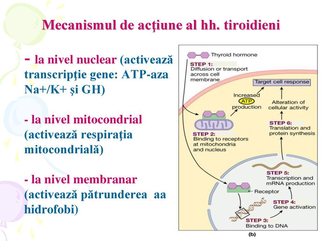 ciclismul interior, mitocondriile și pierderea în greutate - alte -