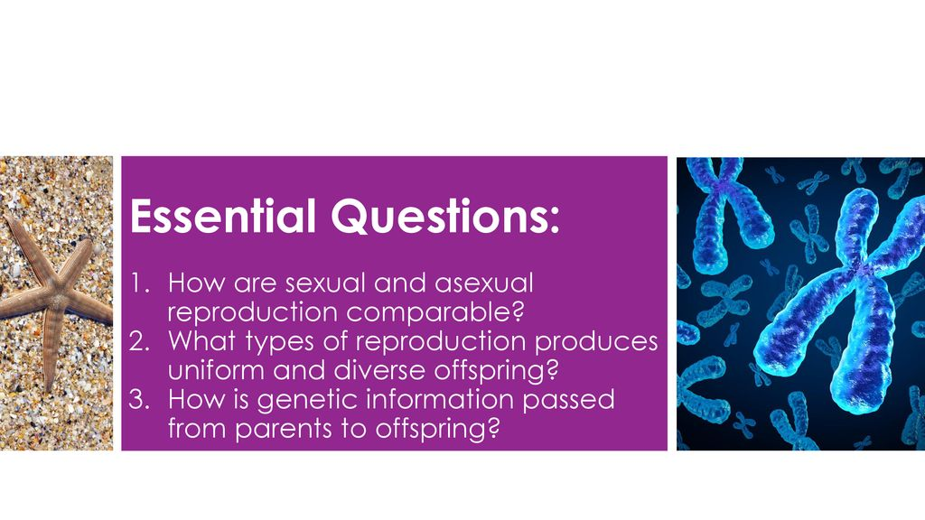Sexual and Asexual Reproduction - ppt download