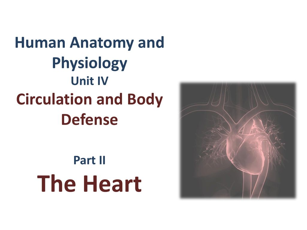 1 Human Anatomy and Physiology Unit IV Circulation and Body Defense Part II  The Heart