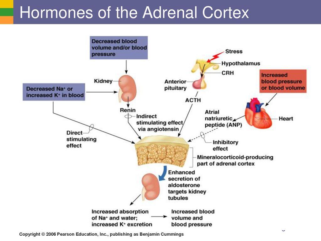 Pdf Sex Hormones And Macronutrient Metabolism