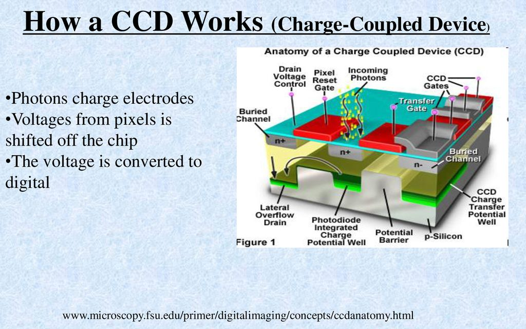 How a CCD Works (Charge-Coupled Device) - ppt download