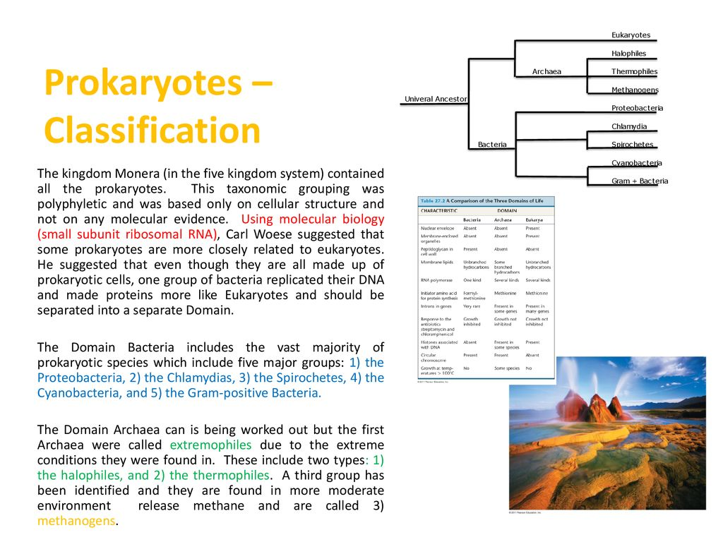 Prokaryotes General Characteristics And Structures The Prokaryotic Cells In Monera Kingdom Example Bacteria Are Did 8 Classification