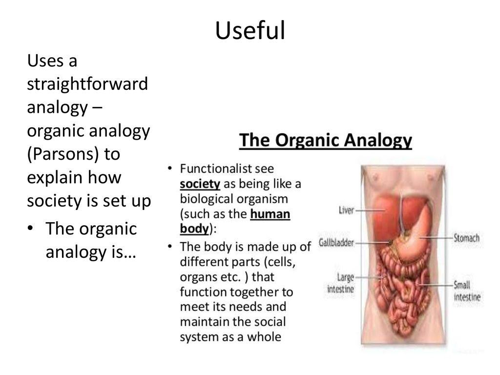 the organic analogy