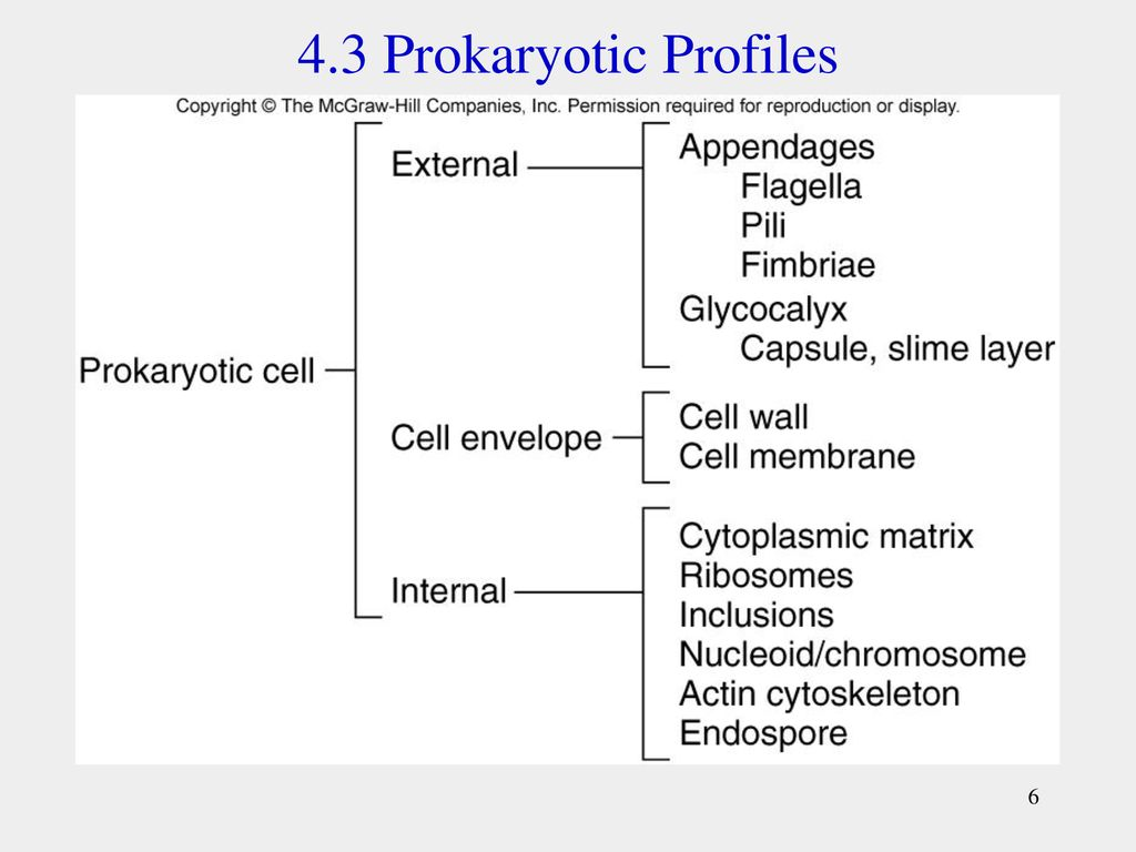 An Introduction To The Prokaryotic Cell Its Organization And Fimbriae Edition 6 43 Profiles