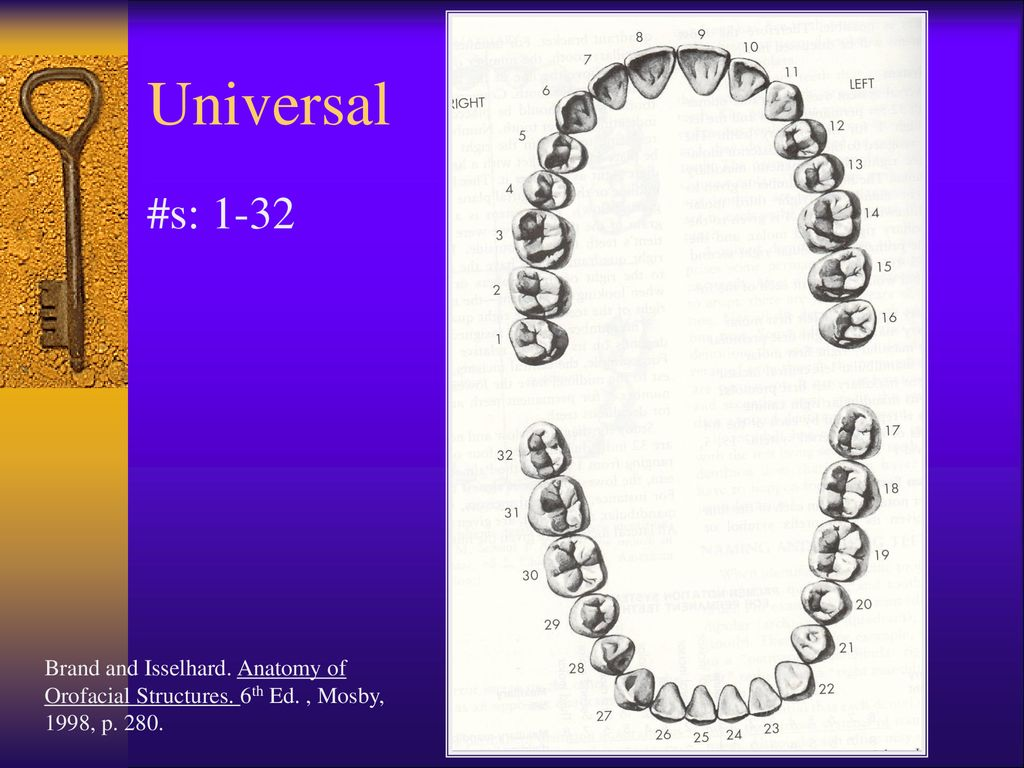 Overview Of The Dentitions Ppt Download