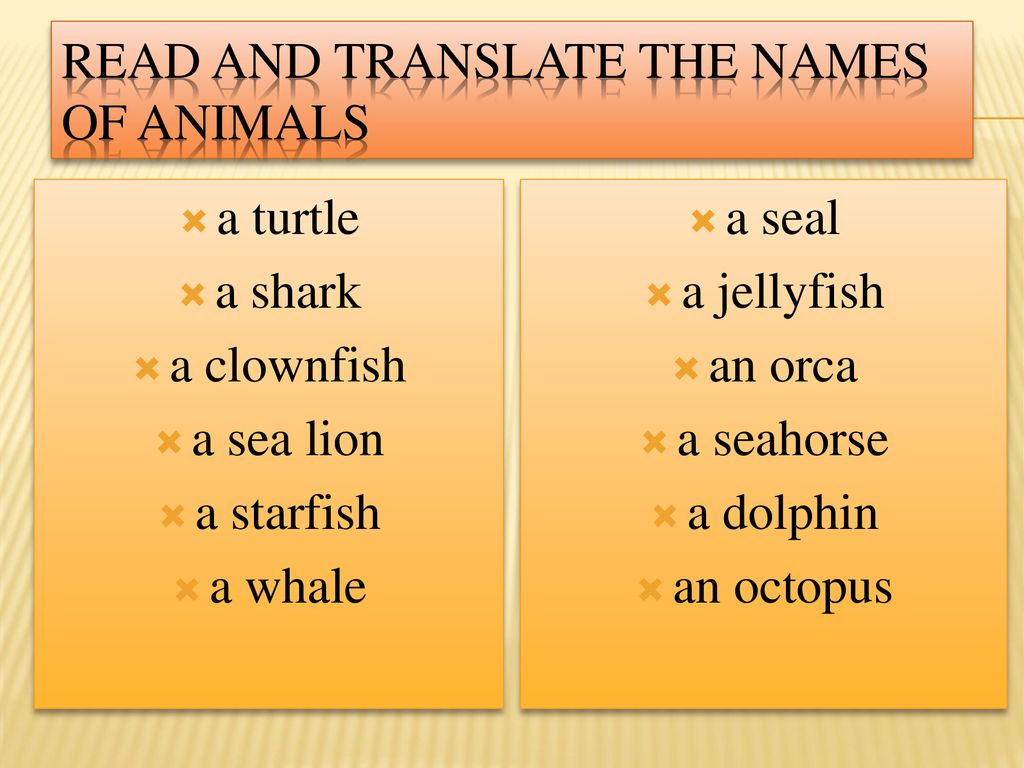 A Contest Lesson Sea Animals  - ppt download