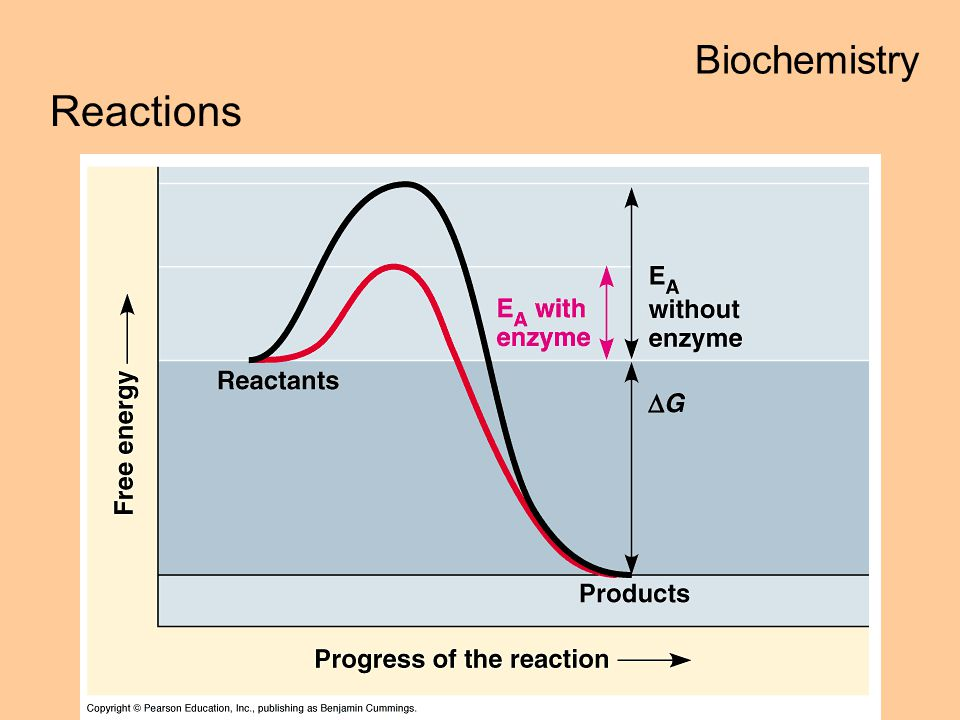 Biochemistry Reactions enzymes