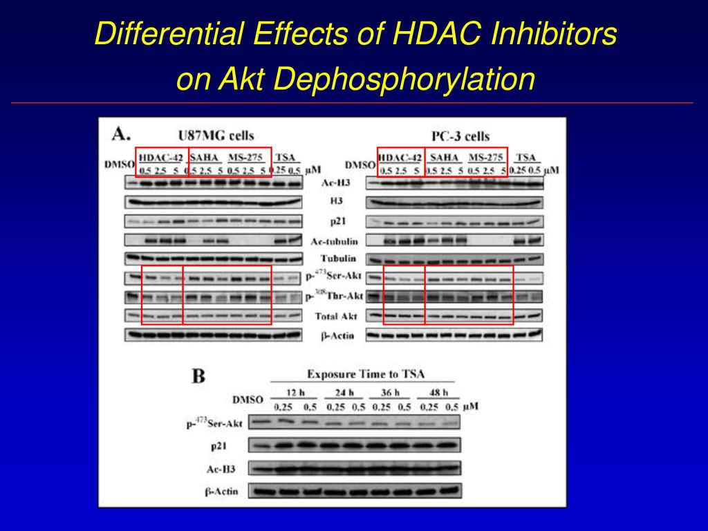 Preclinical studies with OSU-HDAC42 A new orally