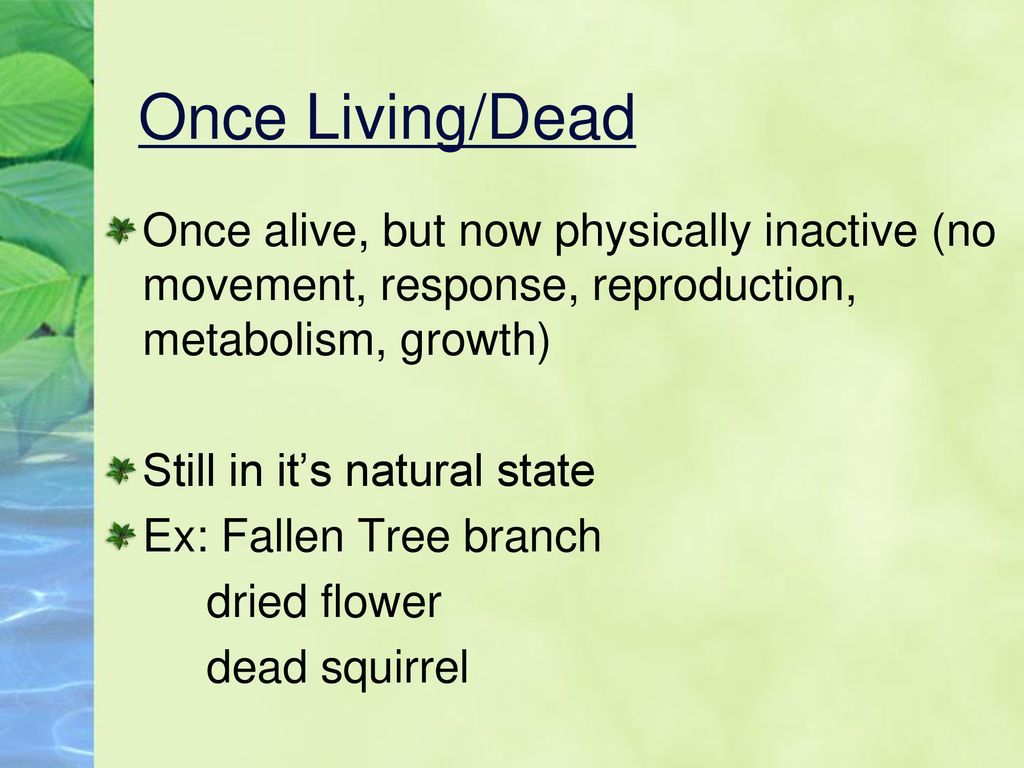 Characteristics Of Living Things Ppt Download