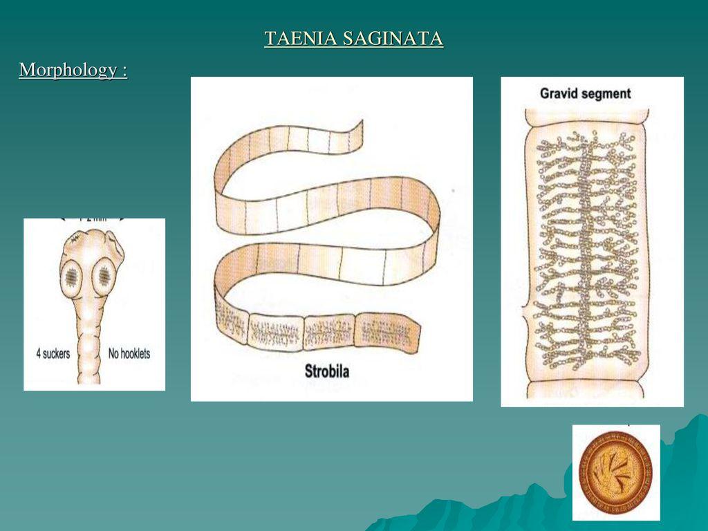 platipus helminths și nematode ppt)