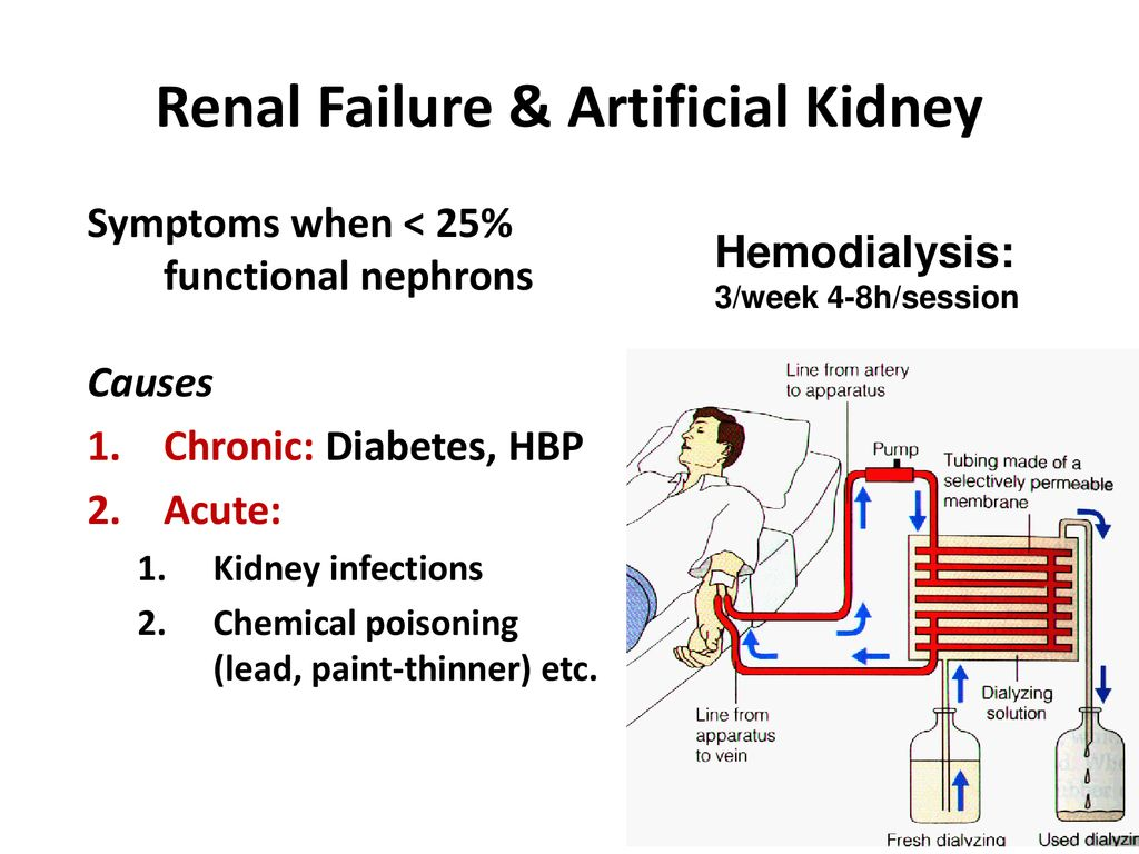 Ch 17 Physiology of the Kidneys Review Anatomy on your own