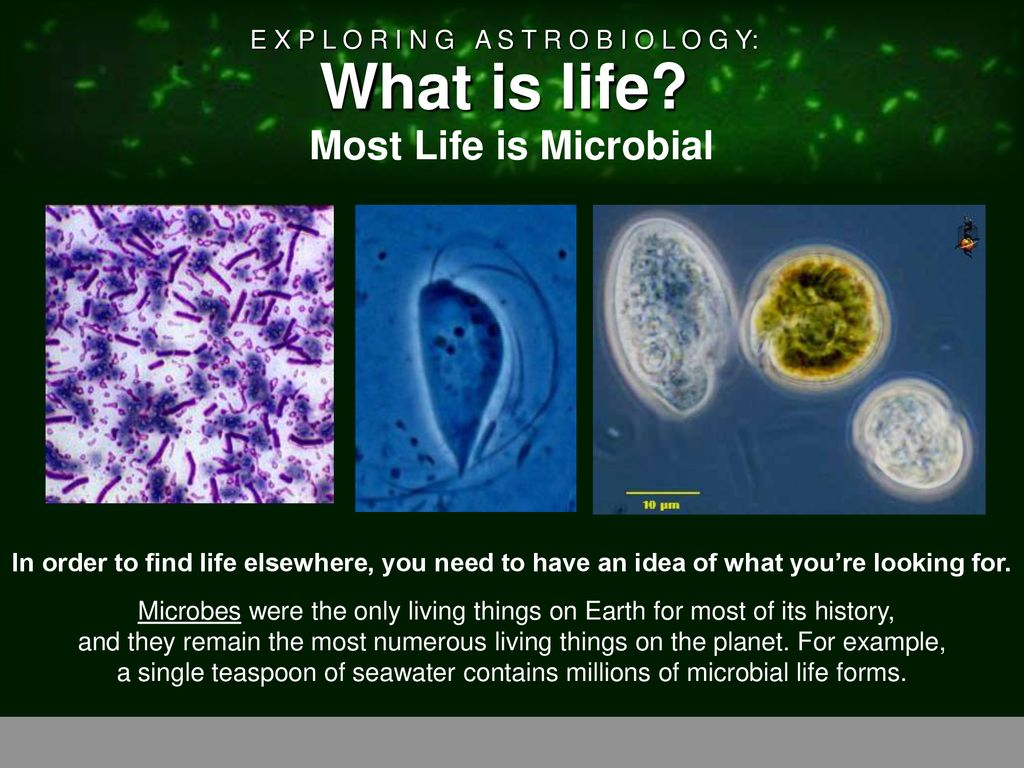 Most Life is Microbial Heading – Bacteria, Image 1 – Bacteria ...
