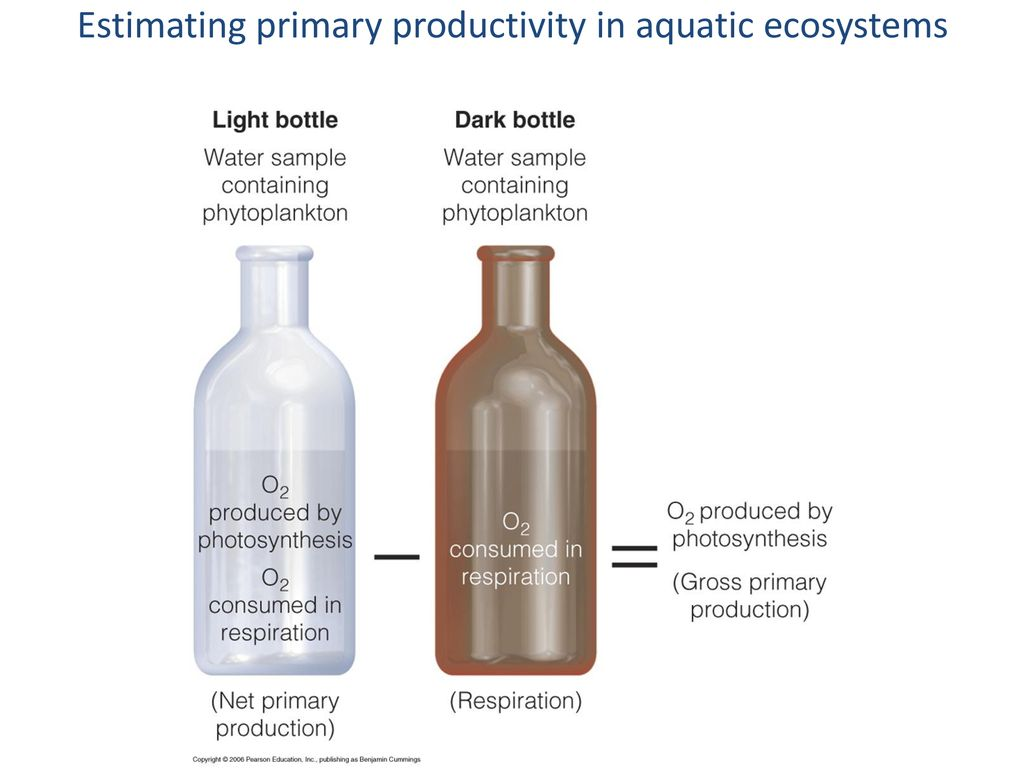 measuring primary productivity in an aquatic ecosystem