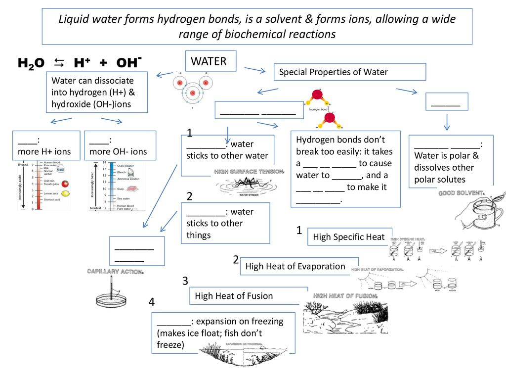 Water Concept Map Ppt Download
