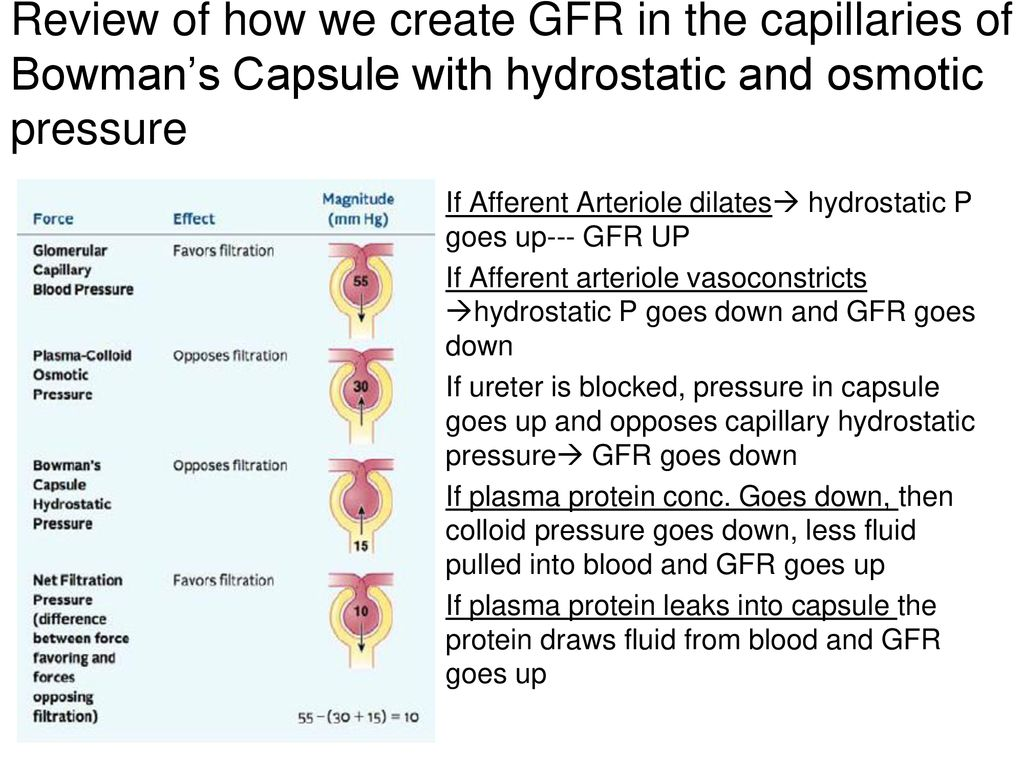 Fluid Volume And Blood Ph Homeostasis 42 And 44 Ppt Download