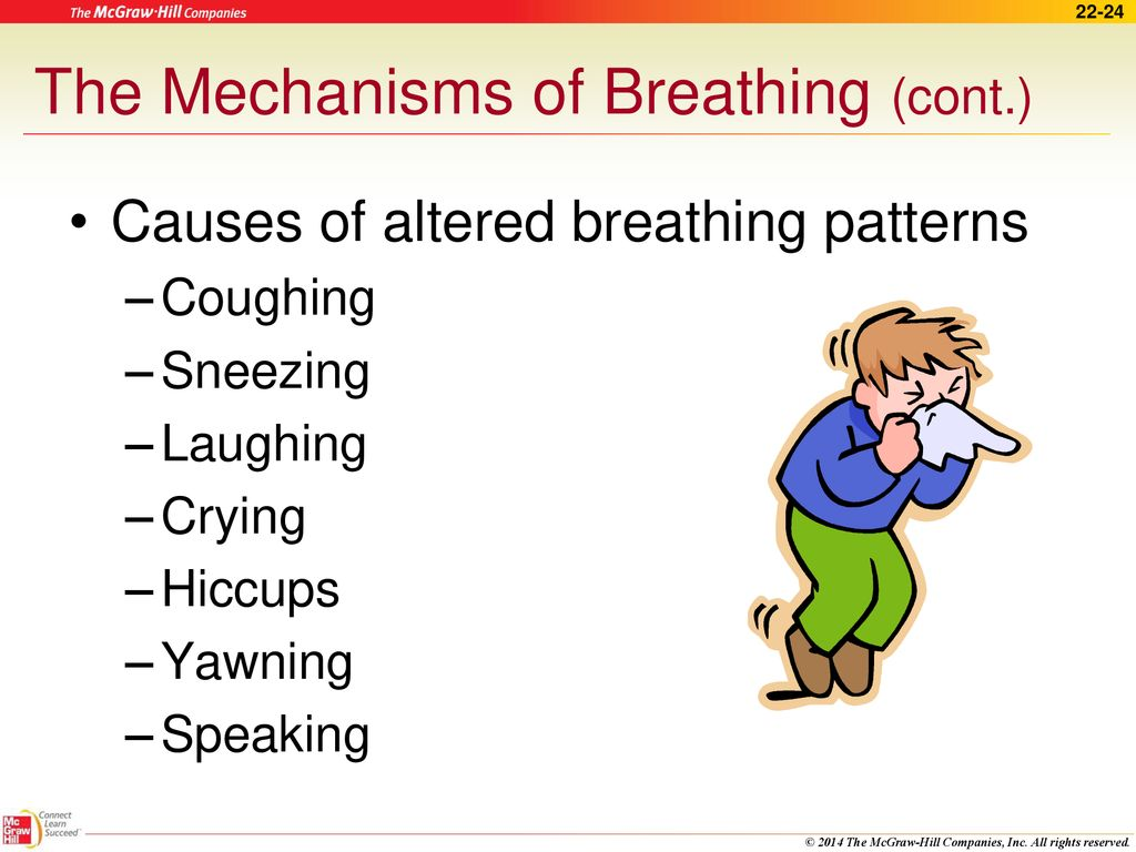 The Respiratory System Ppt Download Diagram Of Inhalation And Exhalation Mechanism Breathing Mechanisms Cont
