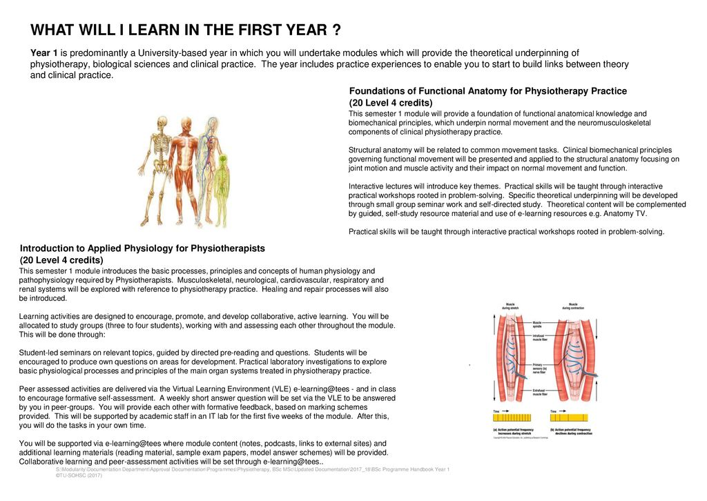 BSc (HONS) PHYSIOTHERAPY - ppt download