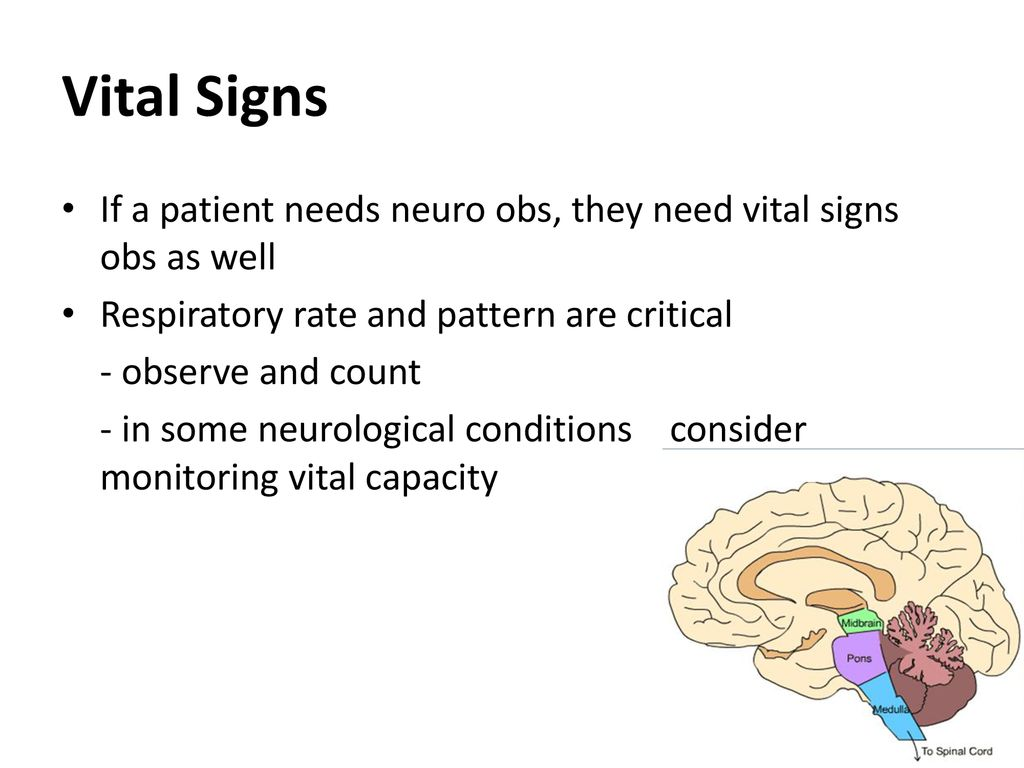 Central Nervous System - ppt download