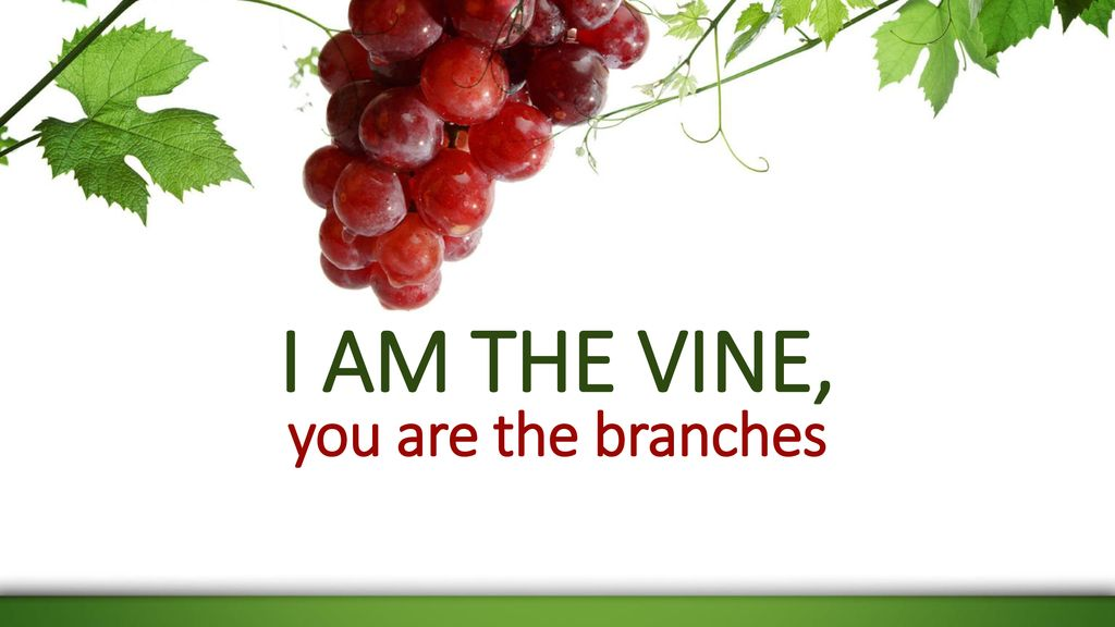 I Am The Vine You Are The Branches Ppt Download