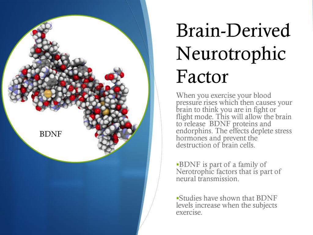 By Brandon Richards Neuroscience - ppt download