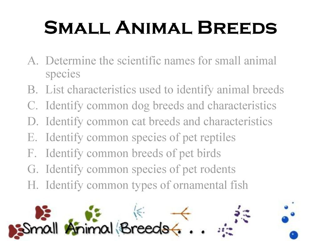 Small Animal Breeds Determine the scientific names for small animal