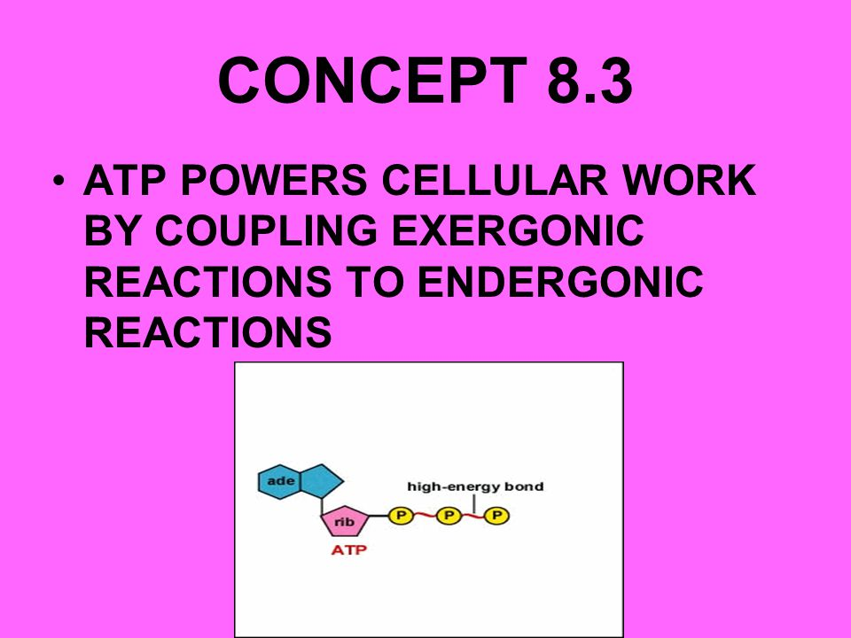 CONCEPT 8.3 ATP POWERS CELLULAR WORK BY COUPLING EXERGONIC REACTIONS TO ENDERGONIC REACTIONS