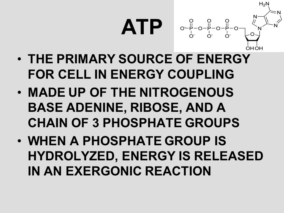 ATP THE PRIMARY SOURCE OF ENERGY FOR CELL IN ENERGY COUPLING
