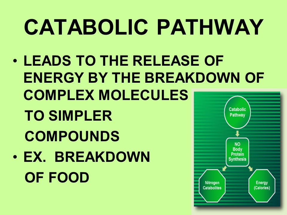 CATABOLIC PATHWAY LEADS TO THE RELEASE OF ENERGY BY THE BREAKDOWN OF COMPLEX MOLECULES. TO SIMPLER.