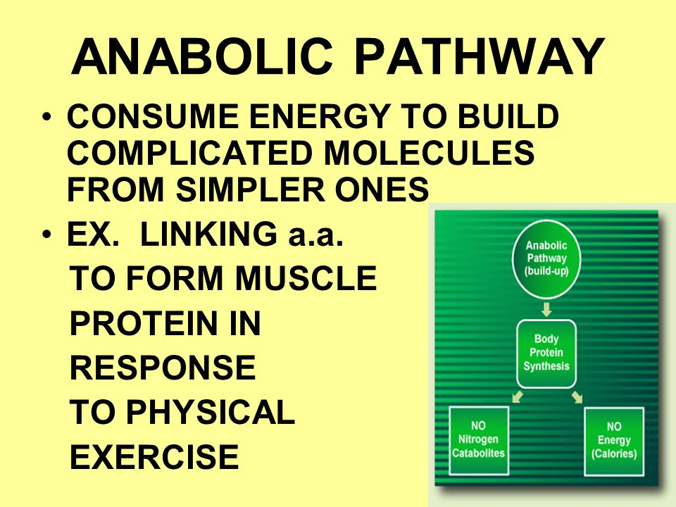 ANABOLIC PATHWAY CONSUME ENERGY TO BUILD COMPLICATED MOLECULES FROM SIMPLER ONES. EX. LINKING a.a.