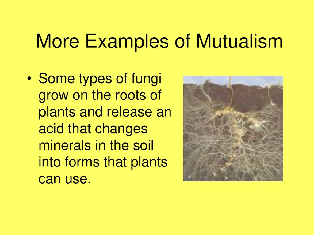 Lesson 2: parasites, yum! An example of mutualism and its effects.