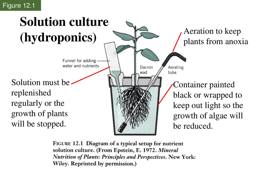 Solution culture (hydroponics) Aeration to keep plants from anoxia