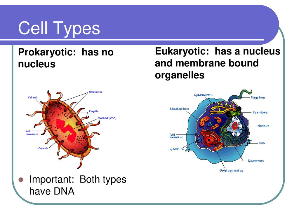CELL STRUCTURE AND FUNCTIONS - ppt download
