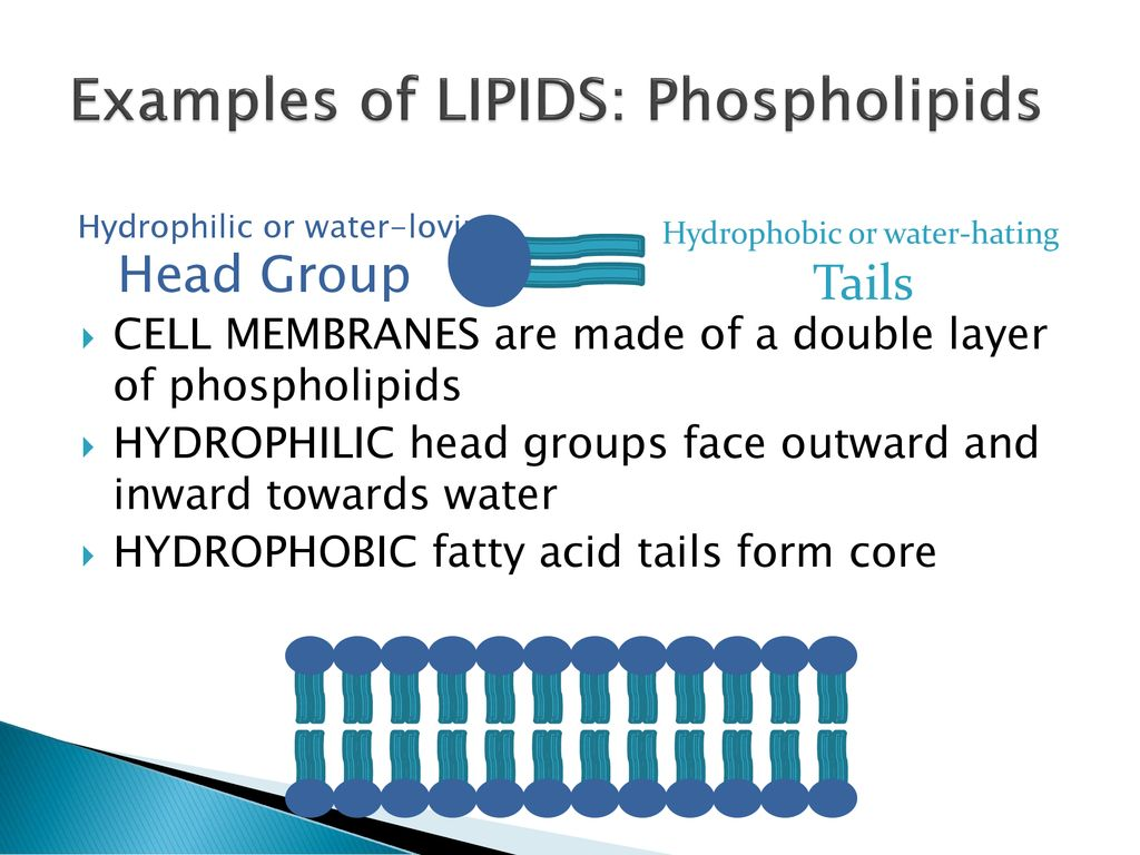 topic: lipids eq: explain the structure and function of lipids