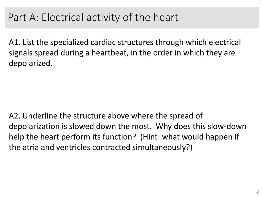 Worksheet: the heart Goals: - ppt download