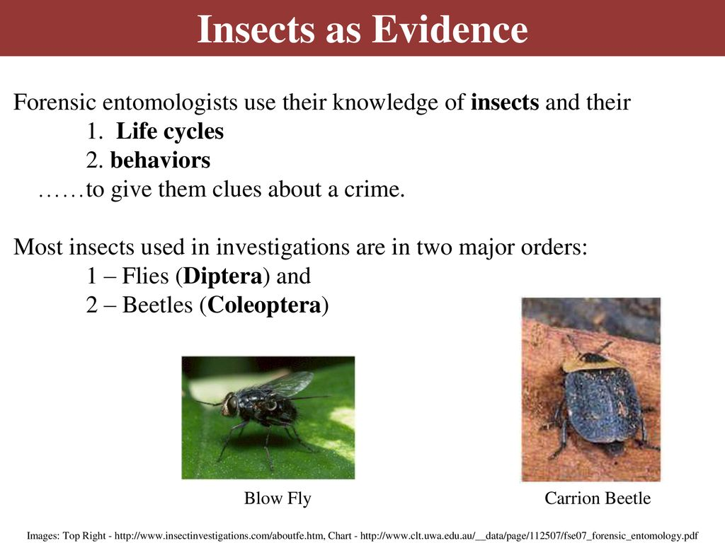 Forensic Entomology Insects As Evidence Ppt Download
